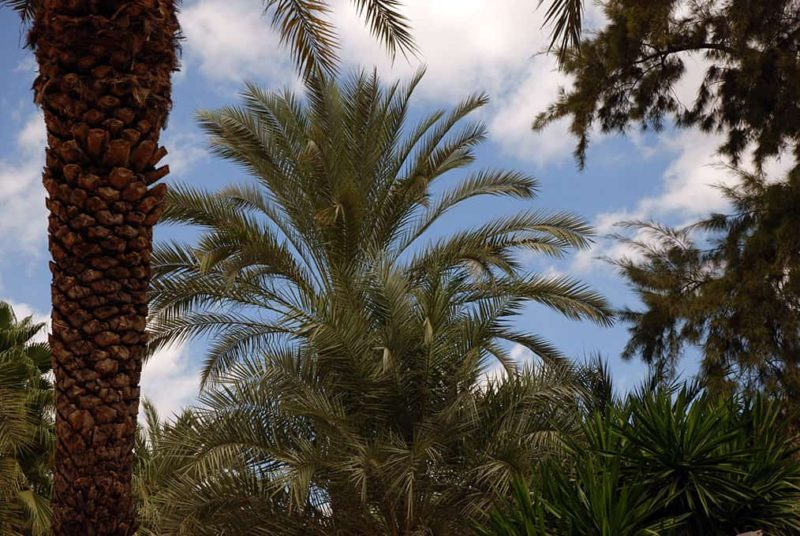 Экскурсия в Эльче - прогулки среди пальм