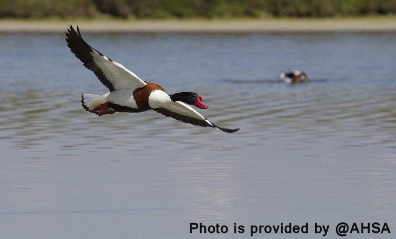 Птицы, обитающие на озере Ла Мата фото
