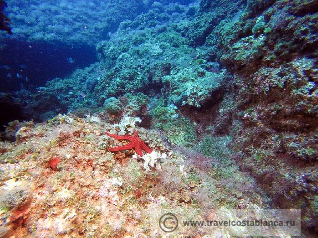 Чем заняться на острове Табарка