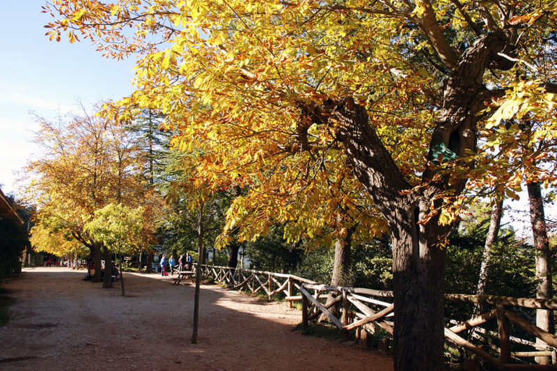 Осень в парке Фонт Роха