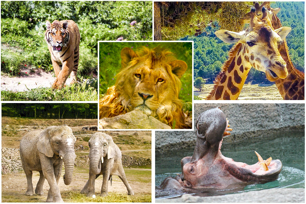 Сафари парк Айтана — в мире животных