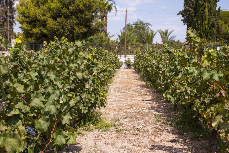 экскурсия на винодельню из Аликанте