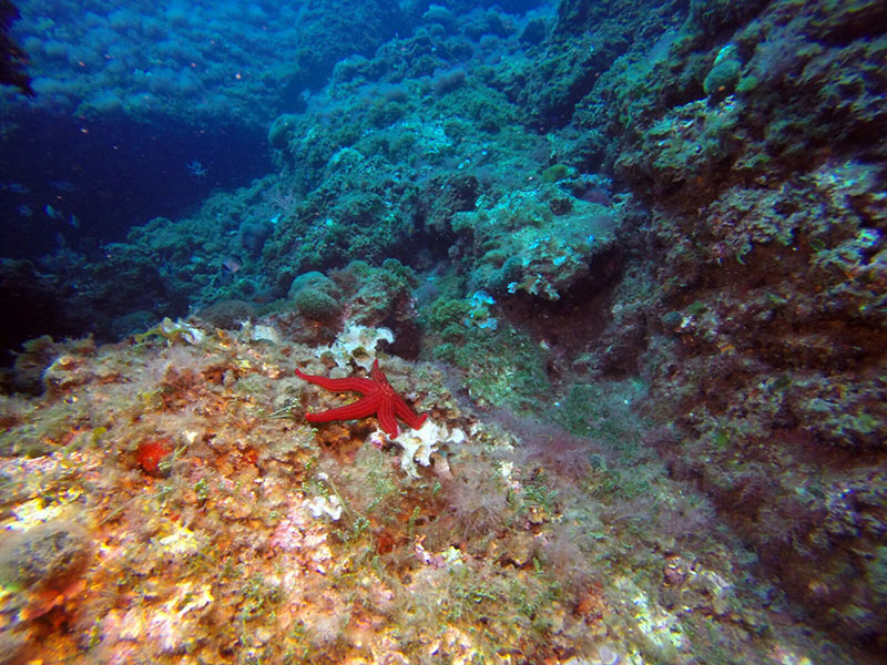 Diving Tabarca