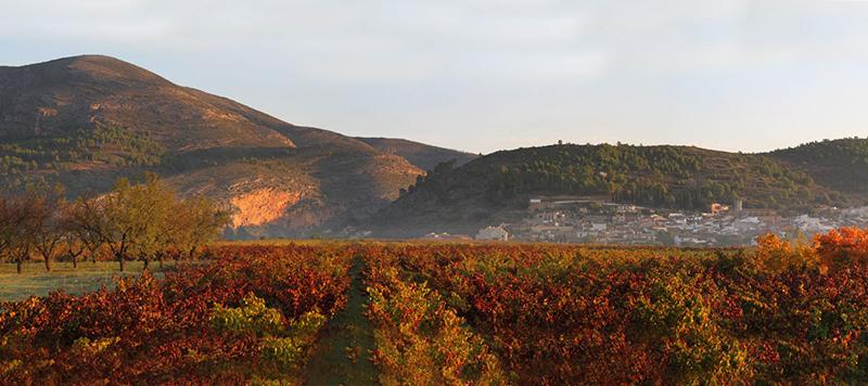 Винодельни Испании бодега Хало