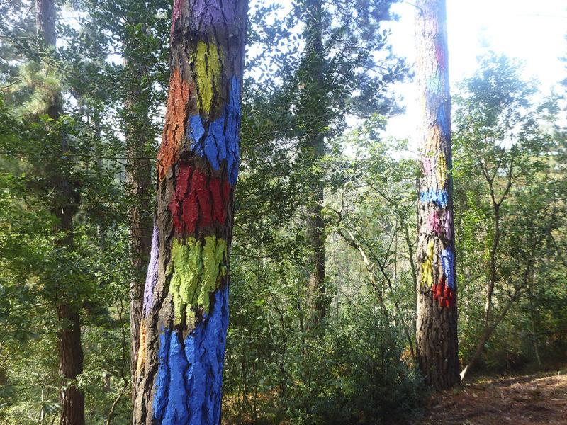 Расписной лес, фото страна Басков