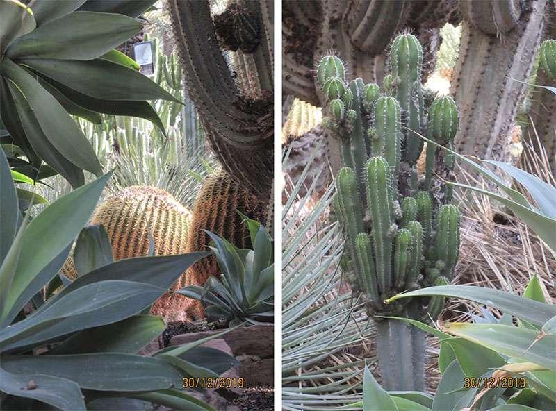 Ботанический сад в Эльче