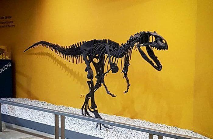 Музей естественной истории в Валенсии